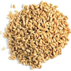 "Семена пшеницы ""Эко Про"", 400 гр"